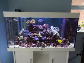 Fish tank, Juwel Rio 300 Aquarium - Marine Set up including Fish