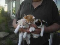 Very pretty KITTENS, looking for forever homes.