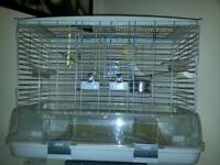 Male and Female budgies with cage