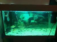 125lt fish tank