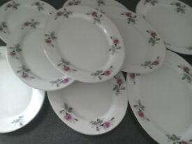 Oval dinner plates