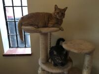 Brother and sister looking for new home