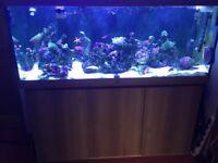 Juwel Rio 400L aquarium