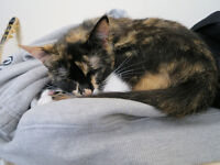 Female cat in Maltby needs a new home