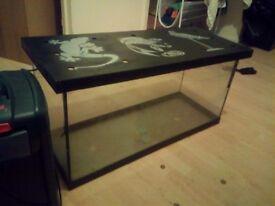 2+ fish tank and fish