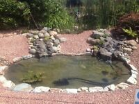Pond Cleaning, Maintenance, Repairs and More with ... 'Fish Pond Perfect'