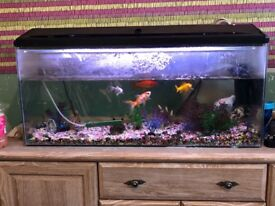3 foot fish tank and set up want gone today !!!!