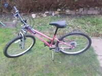 Vivid mountain bike