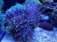 Various Marine Corals