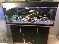 4ft fish tank full set up