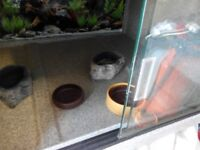 vivarium grey fibreglass lighting bowls with sliding glass doors £35 ono