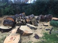 Scots Pine tree, cut into rings, for burning on wood burner