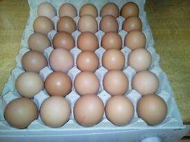 Fresh Farm Eggs For Sale Size Large