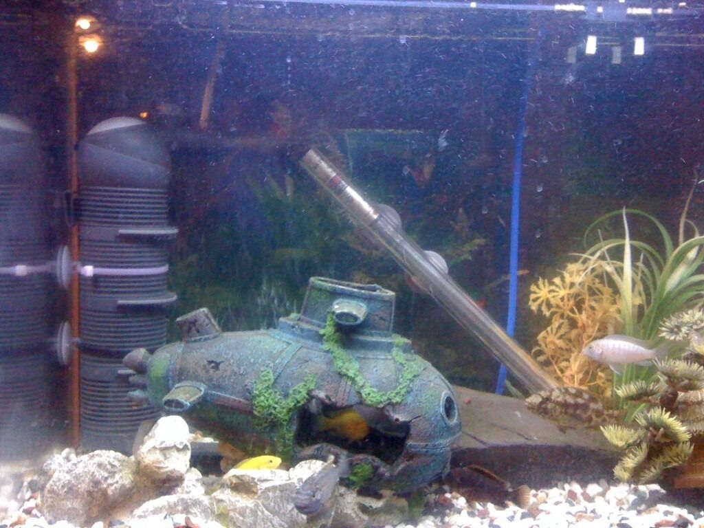 Fun Fish Tank Decorations Fish R Fun Fish Tank And Cabinet Full Set Up With Live Stock In