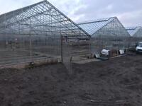 Greenhouses Glass Houses For Sale 75x12m Carlisle Cumbria