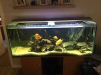 "5'x2'x20"" fish tank full set up with mega fish, loads of kit and FX5."