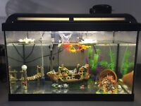 Marina 60 Tropical Aquarium Tank Marina with thermometer Marina Heater, Marina Filter, and toys