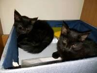 3 lovely kittens for sale