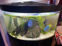 Trigon 190 Corner aquarium complete setup.