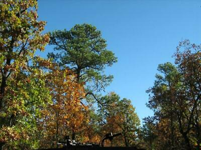 Oklahoma Land - 15 Acres / Offgrid Hideaway Or Hunting  - $750.00