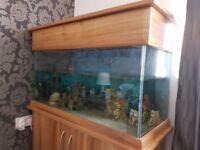 160 litre aquarium for sale - including filter, heater, ornaments