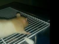 Stunning baby rats