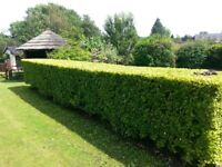 GREEN SCENE Garden maintenance