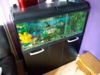 Tropical fishtank and stand