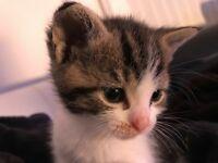 Beautiful friendly kitten