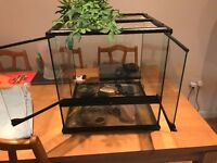 Reptile Vivarium For a Small Lizard