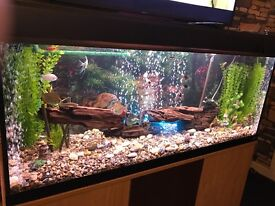 Fluwel fish tank with all the set up ready to go 4ft
