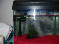 guppies free to good home