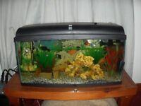young guppies / mollies / platy fish