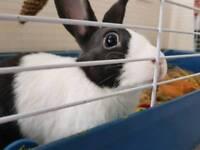 Rabbit needs rehoming