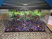 10 gal Fish tank & accessories