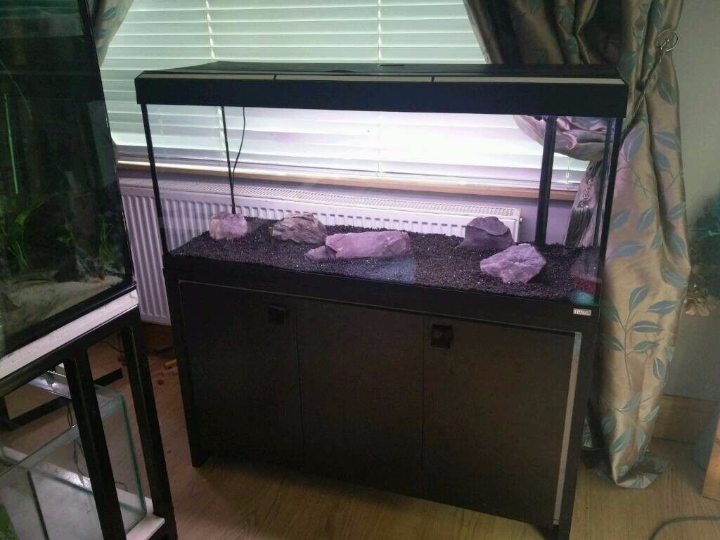 fluval roma 240 litre aquarium large fish tank in poole dorset gumtree. Black Bedroom Furniture Sets. Home Design Ideas