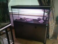 Fluval Roma 240 Litre Aquarium (Large Fish Tank)