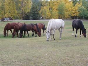Guided Horseback Trail Rides Near Jasper National Park Edmonton Area image 4
