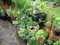 Large Pots Of Garden Ornamental Arrangements