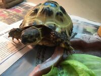 Male tortoise and accessories for sale