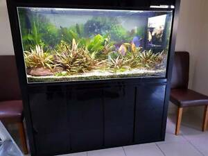 Aquarium and Stand - 5' BOYU Encounter Bay Victor Harbor Area Preview