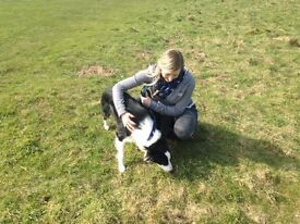 Friendly & Reliable Dog Walker - Dog Walking & Pop in Pet Visits (Pet First Aid Trained)