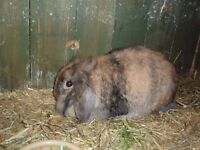 24 Rescue Rabbits all in need of a good home. Varying breeds, ages and colours.. 2nd post out of 3.