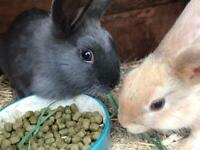 Rabbits mixed breed - 12 weeks old, available now.