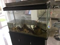 Large tropical fish tank with all accessories