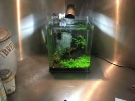 Complete 30L Nano Cichlid Aquarium