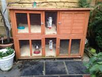 2 rabbits with double hutch
