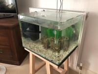 50L Aquarium + Fluval Filter + Heater