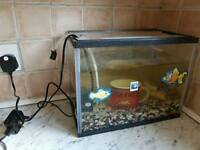 Fish tank with one fish