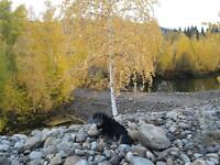 2 km from Dawson City 1-acre parcels for Sale/HouseTrade in town